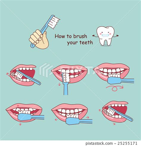 how to brush your s teeth how to brush your teeth stock illustration 25255171 pixta