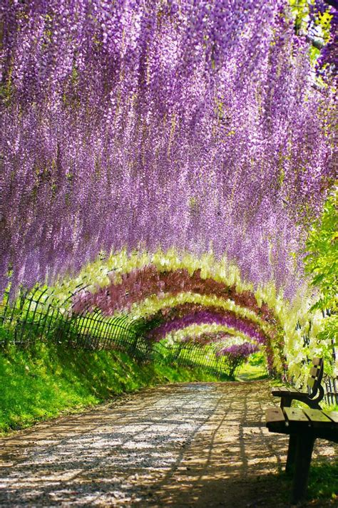japan flower tunnel 27 best images about awesome places to visit on pinterest