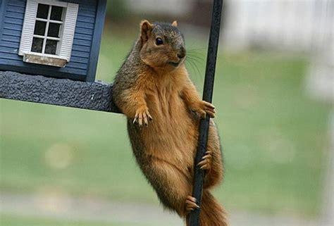 squirrel hanging around 1funny com