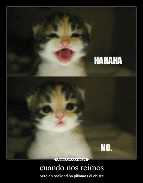 Cute No Meme - memes de jajaja no entendi imagenes chistosas