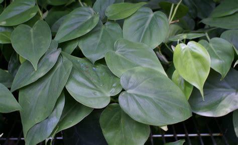 plantas  podem ser cultivadas em casa   funcionam