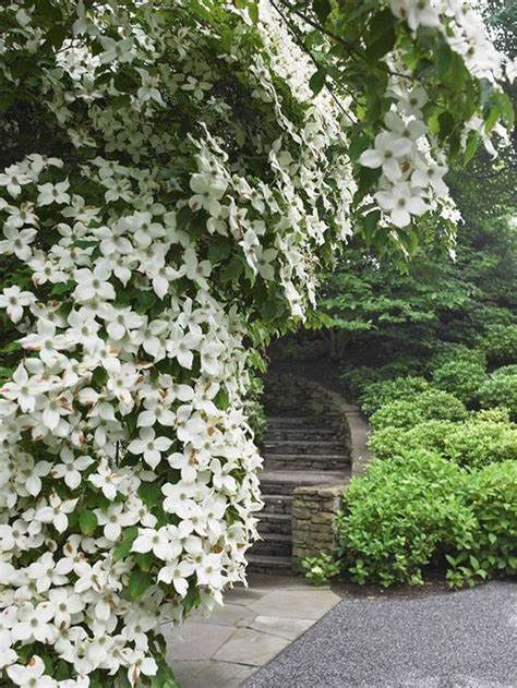 flowering dogwood shrub 304 best images about outdoor retreats on