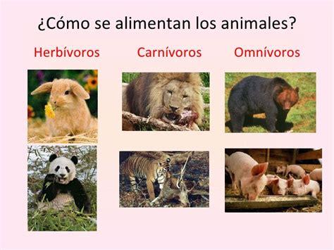 imagenes animales herbivoros carnivoros y omnivoros conociendo a los animales