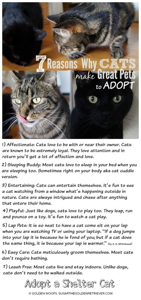 7 Reasons To A Pet by 7 Reasons Why Cats Make Great Pets To Adopt Golden Woofs