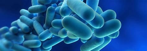 disbiosi intestinale test intolleranze alimentari mineralogramma disbiosi intestinale