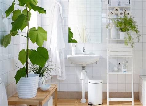 plants for the bathroom 8 shower plants that want to live in your bathroom