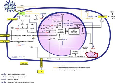 integrated gene circuits integrated gene circuits 28 images the expanded integrated circuit of the cancer cell cell