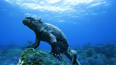 galapagos best islands galapagos islands attractive places for tourism gets ready