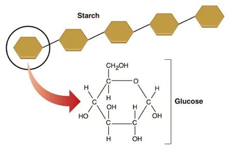 carbohydrates joint many glucose monomers join together to produce the