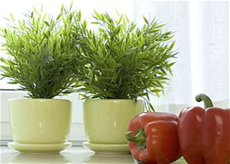 Kitchen Decorating Ideas With Plants Smart Kitchen Decorating With Edible Herbs