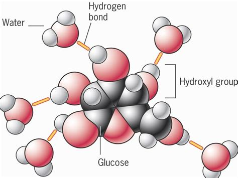 carbohydrates hydrophilic solid water is stable and has the