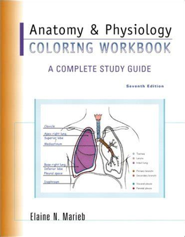 anatomy coloring book marieb anatomy and physiology coloring workbook by marieb