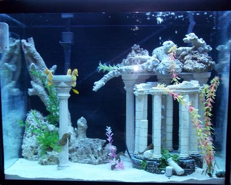 17 best ideas about seahorses on sea tanks seahorse tank top 56g seahorse tank