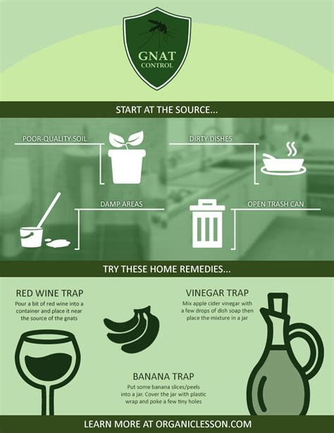 Home Remedies For Gnats by 6 Ways To Instantly Get Rid Of Gnats Fruit Flies At Home