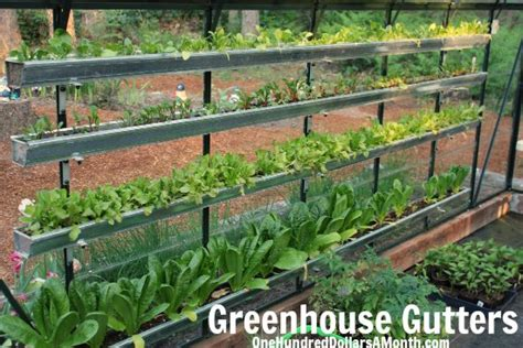 how to grow a greenhouse vegetable garden one hundred