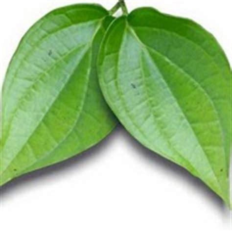manfaat tanaman  obat herbal meracik jamu kunci suruh