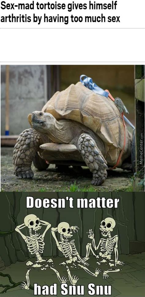 Tortoise Meme - tortoise memes best collection of funny tortoise pictures
