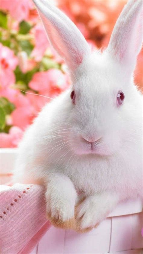 cute rabbit themes 24 best images about easter themes chrome firefox ie