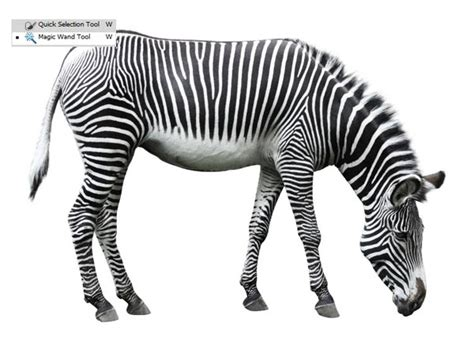 photoshop zebra pattern tutorial photo manipulation tutorial creating vision of the lens