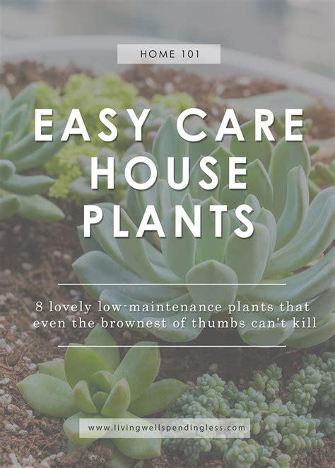 easy care indoor plants low maintenance houseplants easy care house plants
