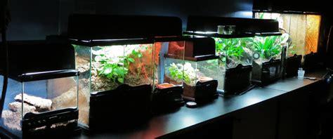 beleuchtung terrarium beleuchtung und innenklima vogelspinnen and stuff