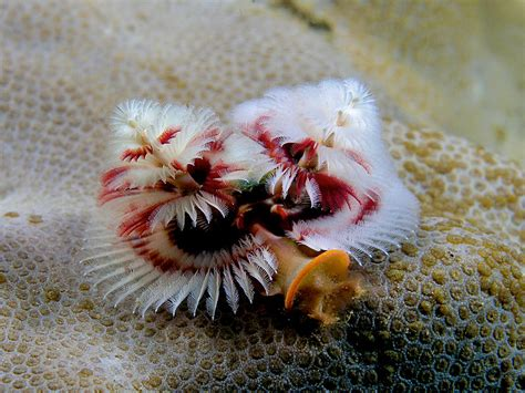 real monstrosities christmas tree worm