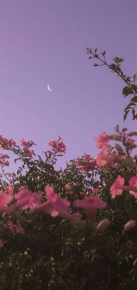 aesthetic flowers wallpaper  aestheticdaydream
