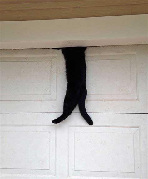 A Cat In Flagler Beach Cashes In One Of Nine Lives In Cat Doors For Garage Doors