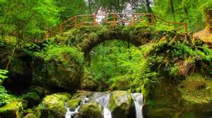 green forest bridge nature wallpaper desktop p 9315