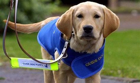 guide dogs cultural barriers make for the blind whale beef hooked whaleoil