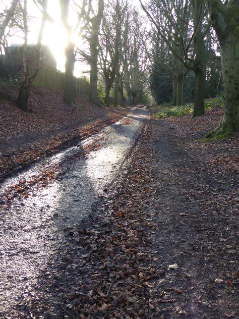 beech walk  mousehold heath  mud  images