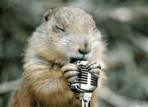 groundhog day karaoke groundhog gifs find on giphy