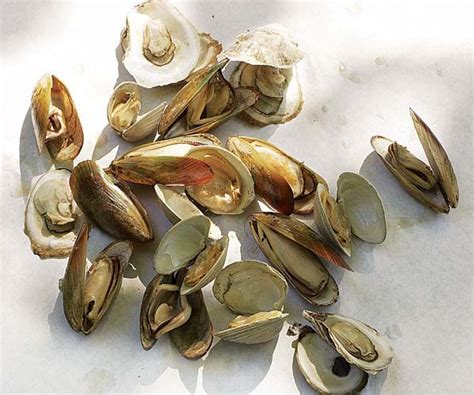 Octopus Juicer And Squid Scrub Brush Them Or Them by Grilled Clams Mussels And Oysters Bbq