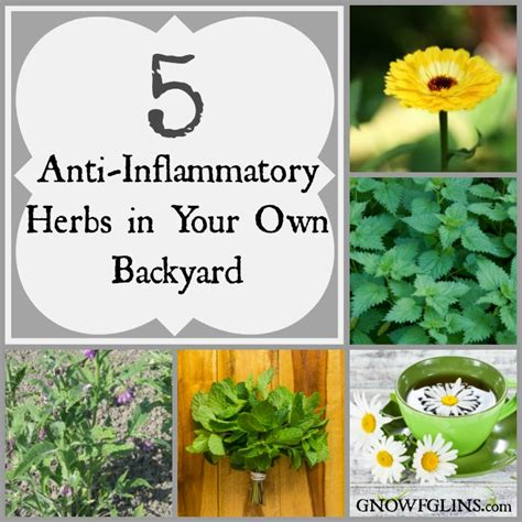 in your own backyard 5 anti inflammatory herbs in your own backyard whole