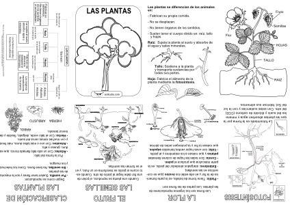 mini biography de beethoven en ingles mini libro de las plantas actiludis