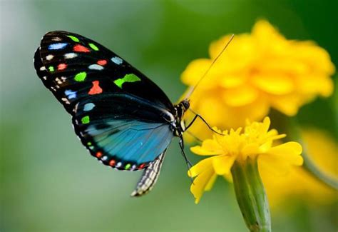 imagenes de mariposas oscuras 9 cosas sorprendentes sobre las mariposas que no deber 237 as