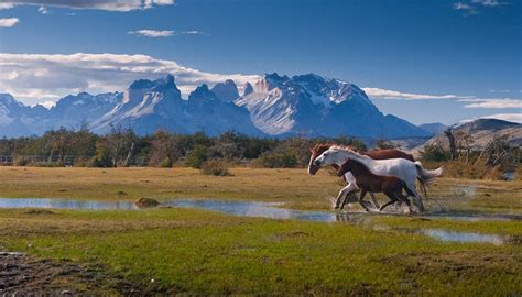 imagenes de paisajes y caballos te gustaran estas bonitas imagenes de paisajes con