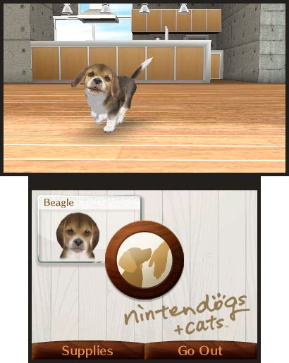 nintendogs shih tzu nintendogs cats bomb
