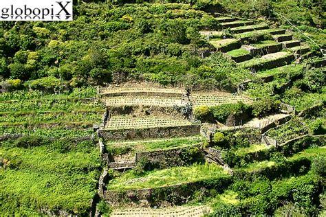coltivazione a terrazza foto cinqueterre uliveti e vigneti a terrazza 2 globopix