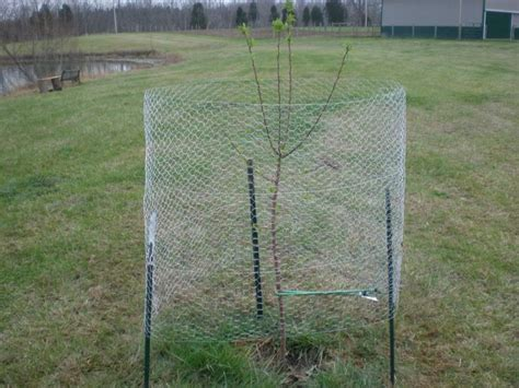 protecting fruit trees from deer 17 best images about garden fruit and berries on