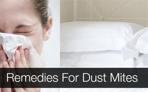 mites treatment home remedy 12 remedies for dust mites homestead survival