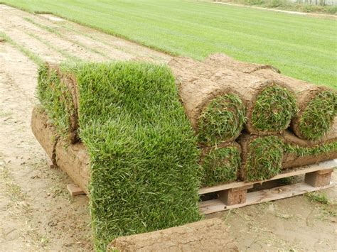 tappeto erboso a rotoli prato a rotoli e servizi di giardinaggio non verde