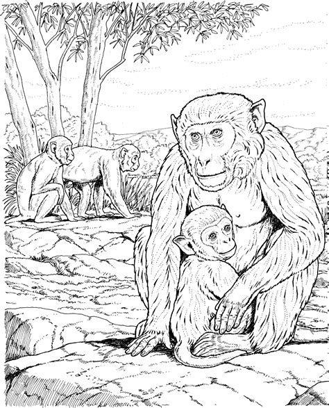 Monkey Family Coloring Pages | how to draw monkey family