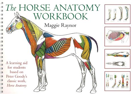 saunders veterinary anatomy coloring book 1e the anatomy workbook by maggie raynor