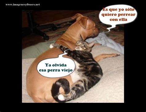 imagenes chidas y graciosas im 225 genes de perros y gatos graciosas para el whatsapp