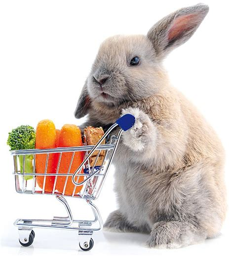 new year rabbit facts interesting facts about the new year 28 images laser