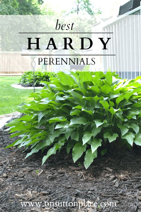 hardy plants the diy gardener s guide on sutton place