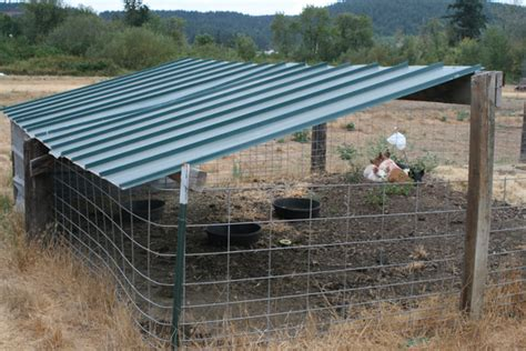 Pig Sheds For Sale by Pigs Stories From The Farm