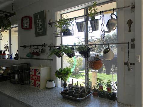 indoor herb garden herbs indoors garden windows