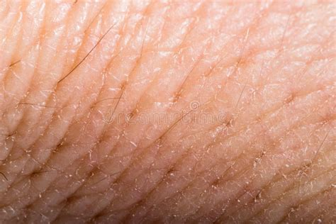 macro of clean healthy texture human skin stock photo 497410486 up human skin macro epidermis stock photo image 36429598